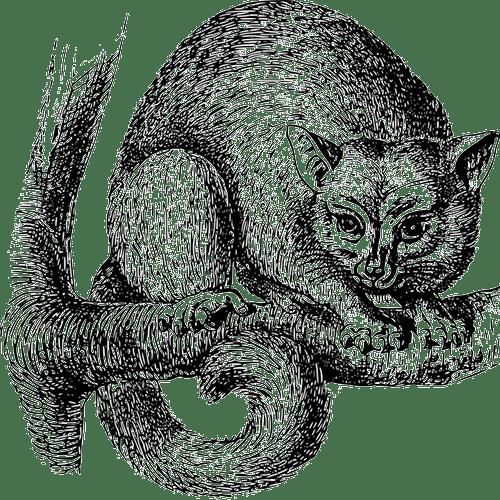 possum-google-update