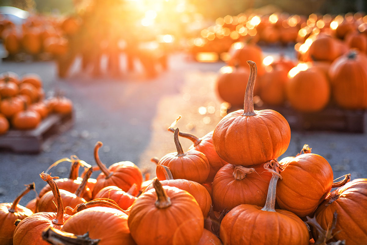 Autumn Event + Activity Guide: What's Happening in Every Sun Country Domestic Destination