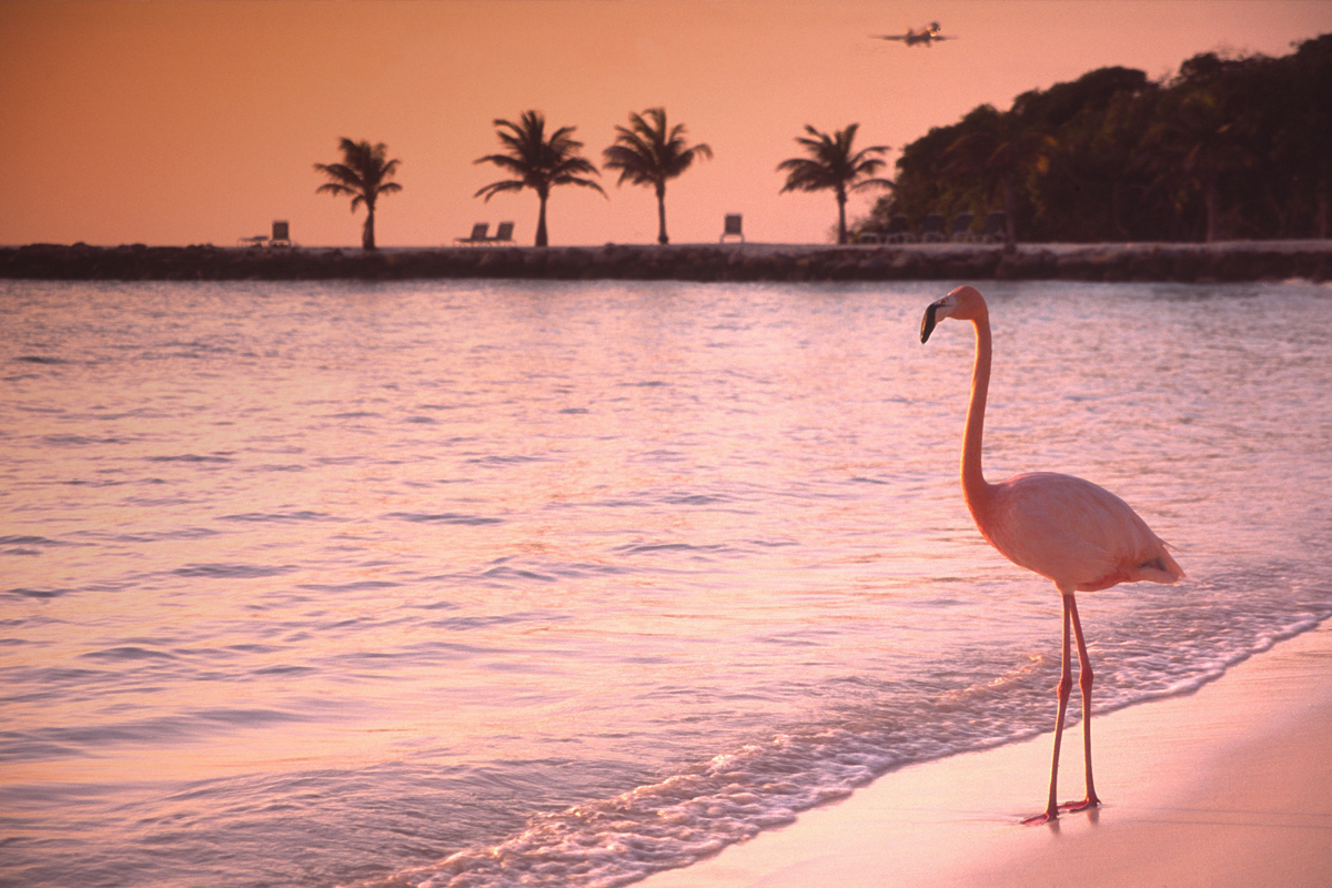 10 Reasons to Fall in Love With Aruba