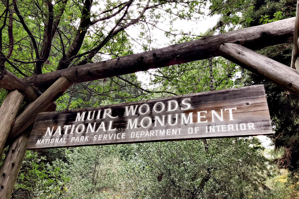 Muir Woods, A Magnificent Place: Tips to Navigate the Forest