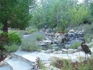 Grey water for pond eco system