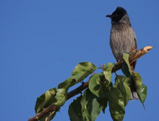 Bundi Bird