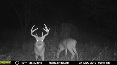 Marion County Kansas Land For Sale-Whitetail Deer