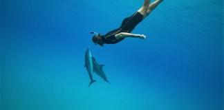 Billede af Tobias, der dykker med delfiner