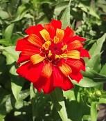flower from Monday's short walk
