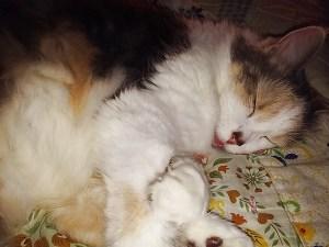 Mary Jane resting beside me