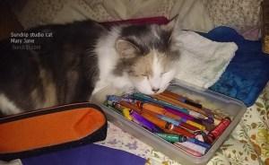 studio-cat