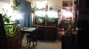 Zen Room 2