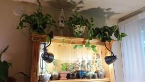 Book Shelf Plants Sundrip