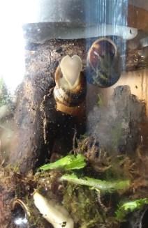 I heart you snail