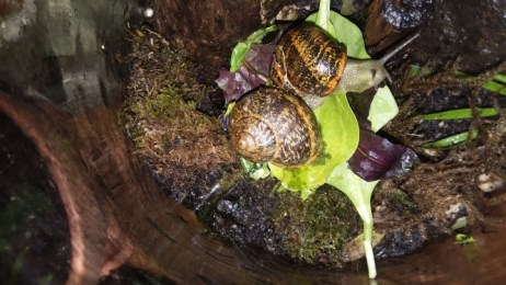 Snails at home on spinach