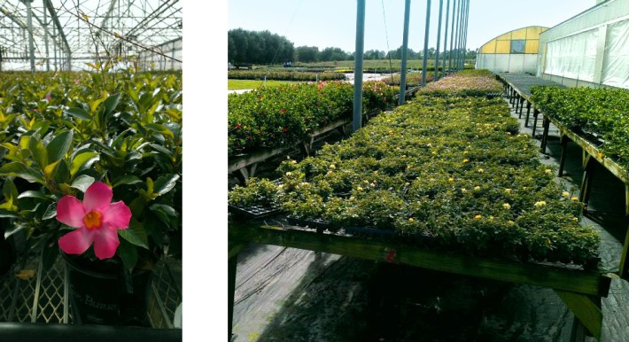 sunfire-nurseries-florida-greenhouses