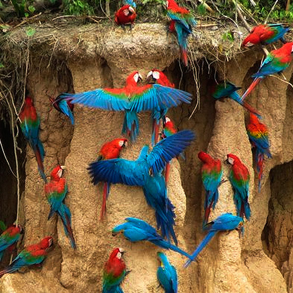 Macaw Clay like lake