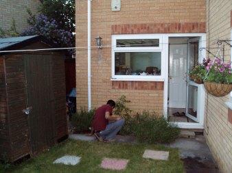 Planting Wisteria