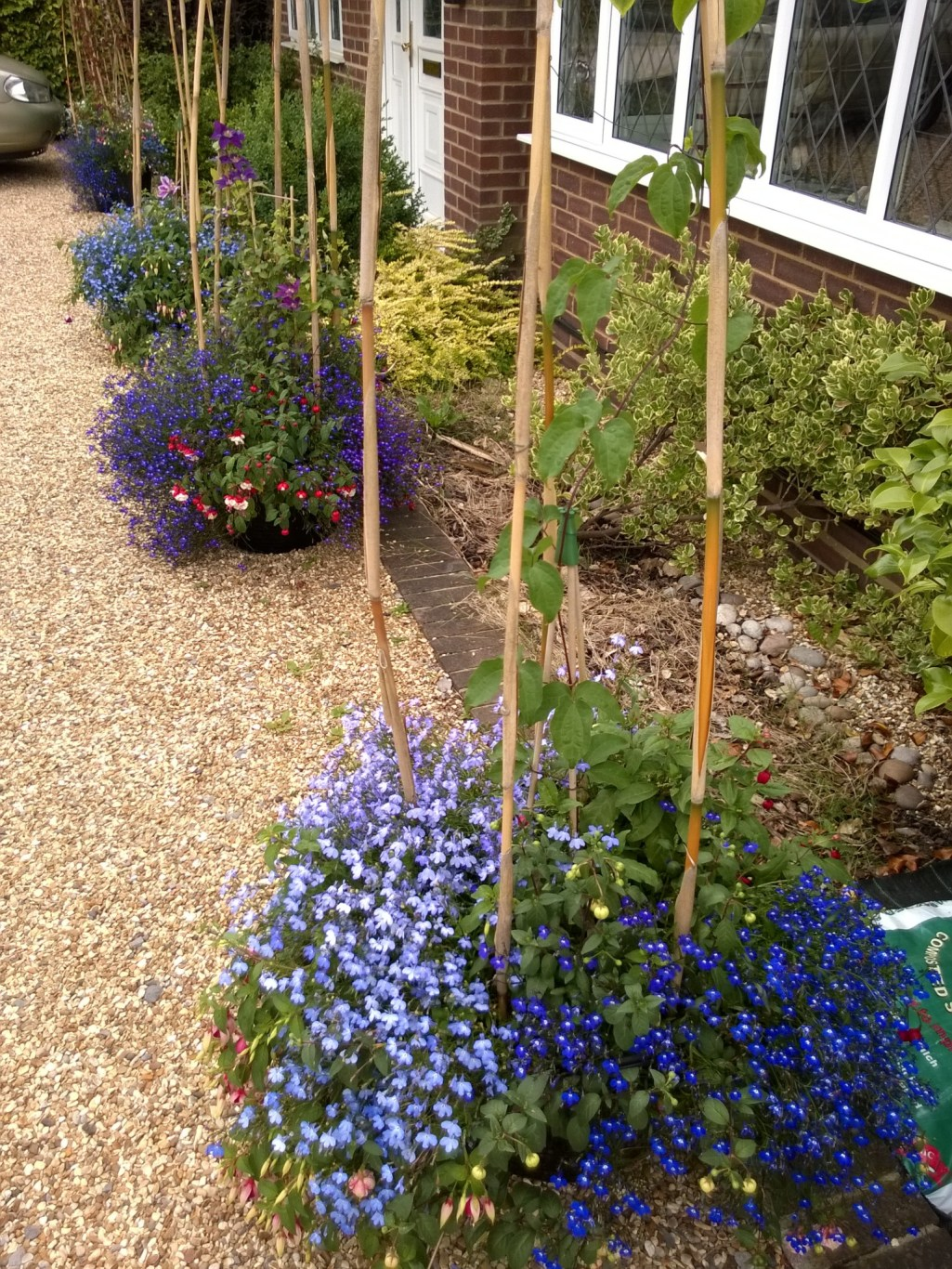 Clematis Trugs with Bedding