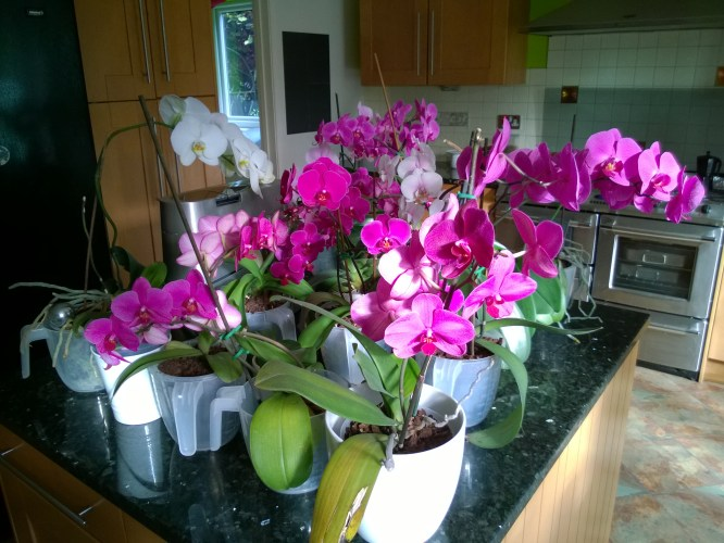 Time to Water the Orchids