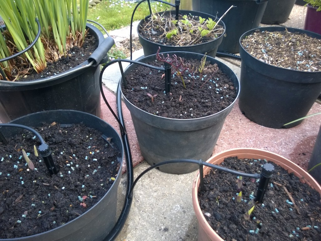 Patio Pots with Auto-Irrigation