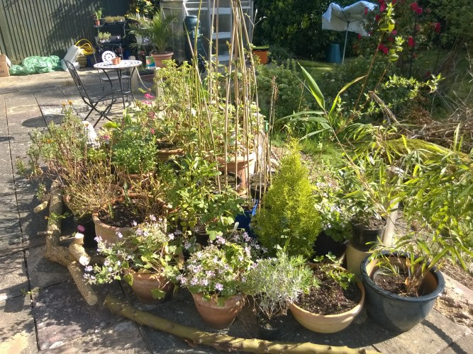 The Nomadic Patio Pot Plants - Part 1