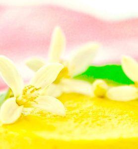 Mini Mango Cheesecake, raw, vegan gluten free,paleo