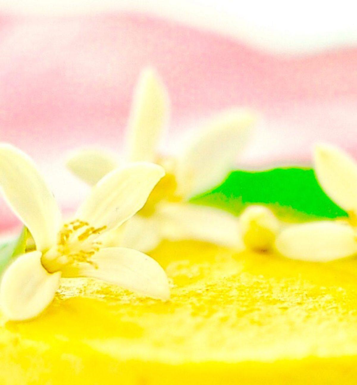 Mini Raw Mango Cheesecake (Vegan, GF)