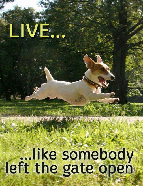 dyfpg-happy-dog-jumping.jpg_505x655