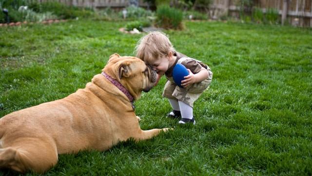 2qgiv-dogs-make-lives-whole.jpg (640×360)
