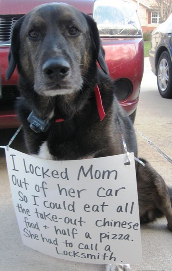 naughtiest dogs shaming