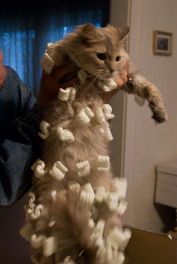 Cats That Found Out About Static Electricity The Hard Way
