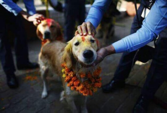 festival for dogs