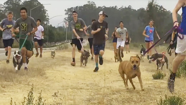 high school cross country team takes shelter dogs for run