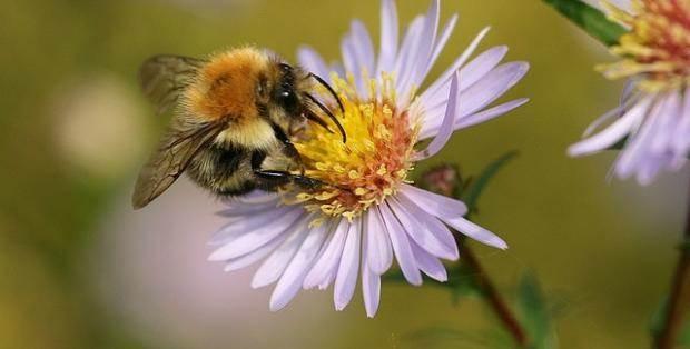 Cedar Rapids saves the bees