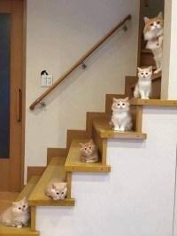 Stairway to Heaven - Cat Version