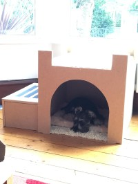 Owner Builds His Dog A Castle-Bed So He Can Watch The ...