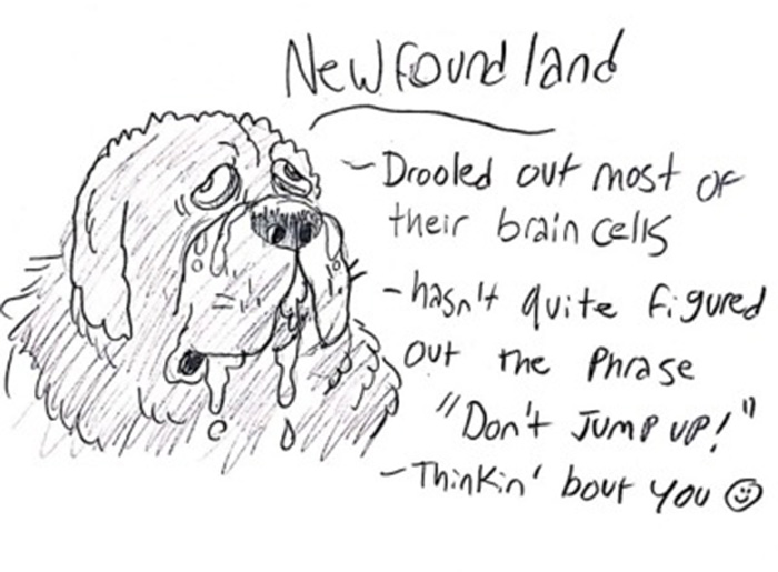A Hilarious, Yet 100% Accurate, Guide To Dog Breeds