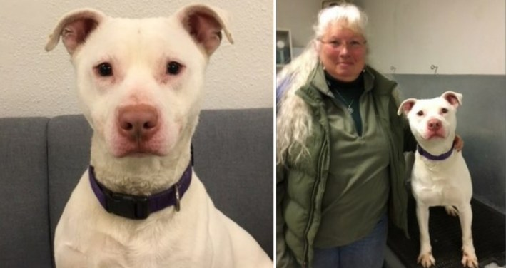 unadoptable deaf pit bull becomes first k9