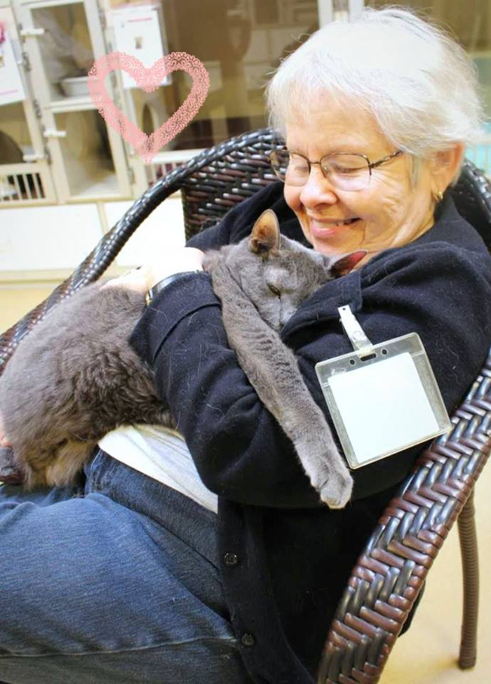senior cat adopted by elderly couple good news