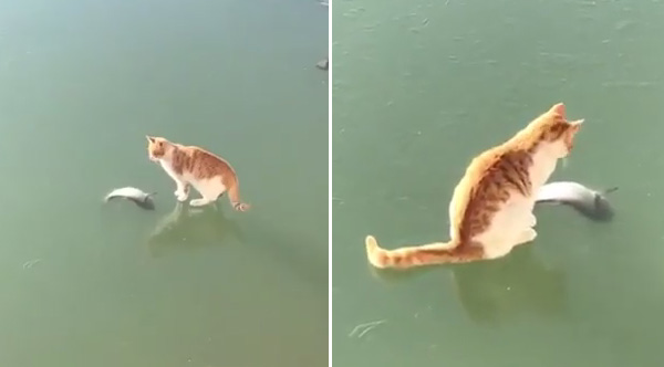 cat tries everything to
