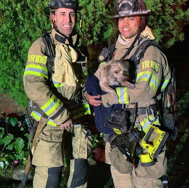 firefighters revive dog