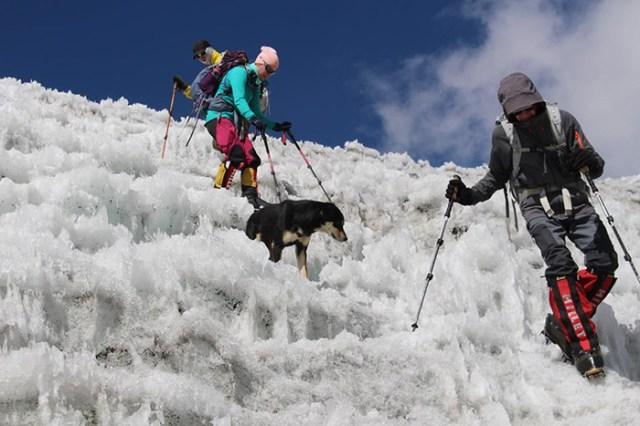 stray dog climbs Himalayan summit