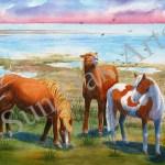 Assateague Horses