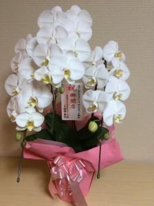 香川の自習室コワーキングスペース『サンプラット』開店祝いbmia