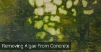 Remove Algae From Patio | Design Gallery