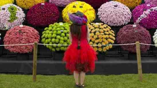 rhs-chelsea-flower-show-2015-6fb17726b604beb457dcfc0afc3b690a