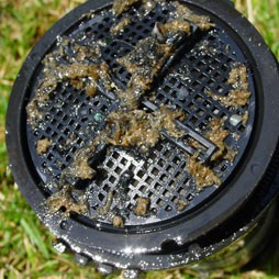 Clogged Sprinkler Head Repair New Port Richey