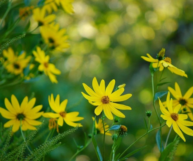 May Flowers - Our Florida Favorites
