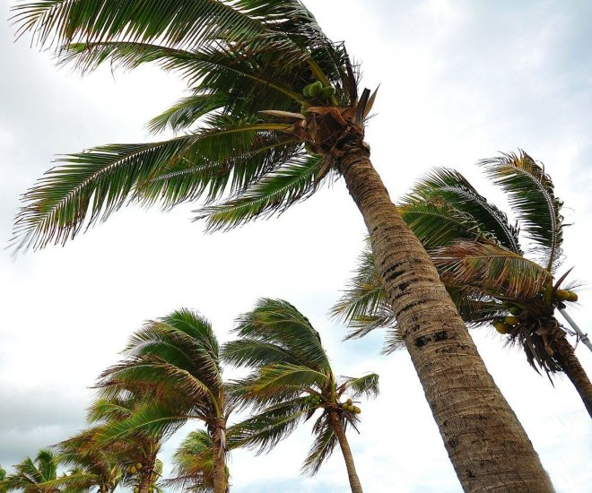 Hurricane Preparation for Your Trees and Plants