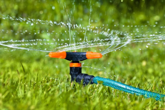 How Often Should Tampa Residents Water Their Lawn in Winter