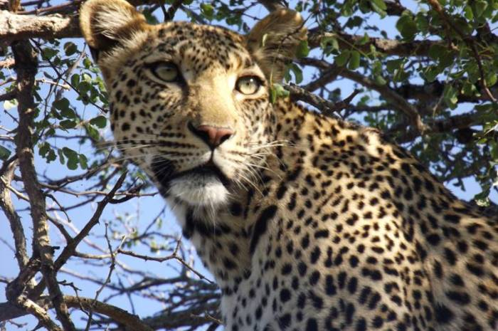 Our Team Travels: My Kruger Safari – Michelle Astbury