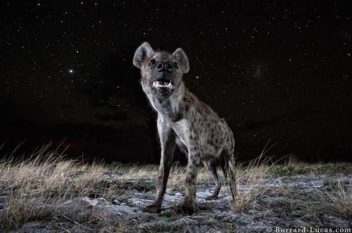 Awe-inspiring Angles on Wildlife Photography