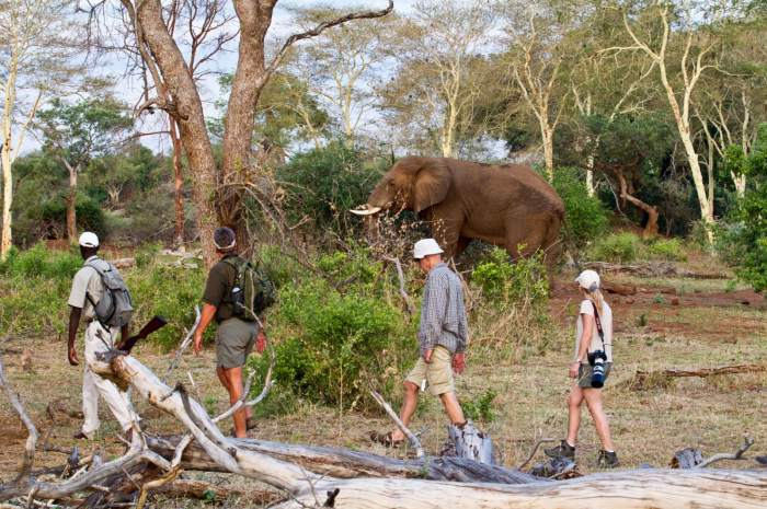 Three different Kruger Park Walking Trails to suit adventurous safari goers